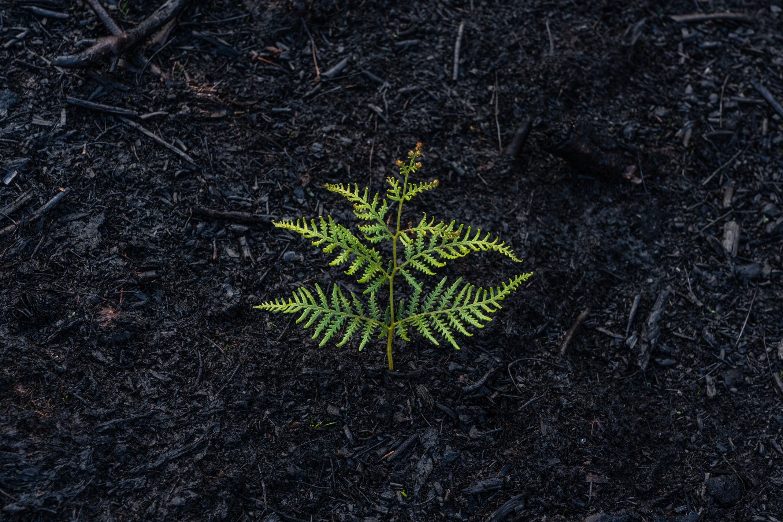 A fern flourishes in an unlikely environment